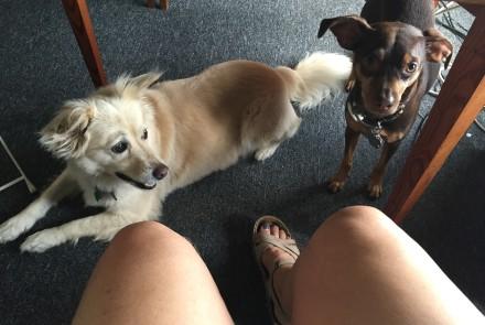 Kitsu and Rafa